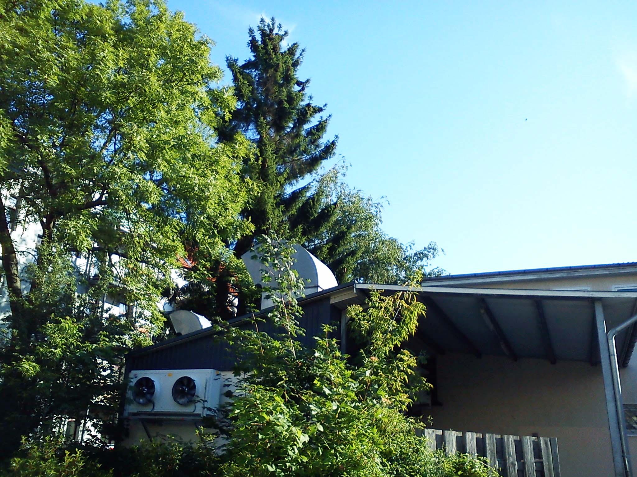 Limpieza de jardines en zaragoza cangurin for Arboles altos para jardin